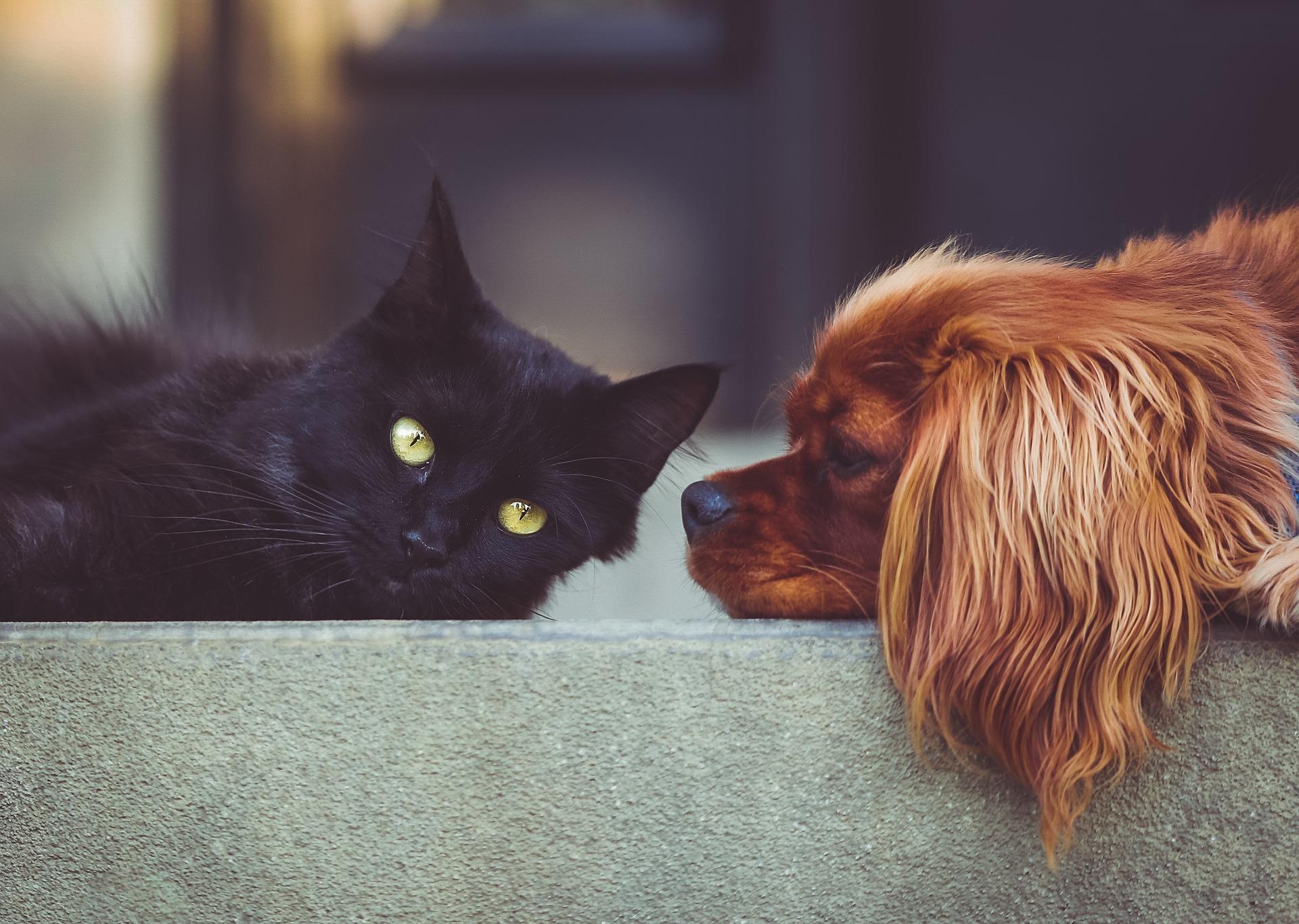 L'importance de la souscription à une mutuelle animaux