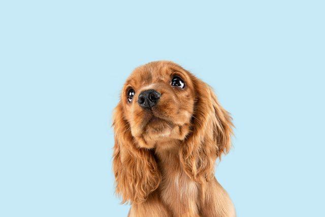 Comment rendre heureux les chiens et les chats ?